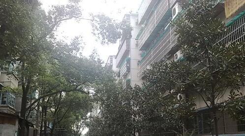 广厦新村环境图