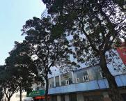 海南国际贸易商务大厦