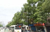 东光街小区