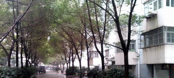 天平公寓(芙蓉区高级人民法院老宿舍)环境图